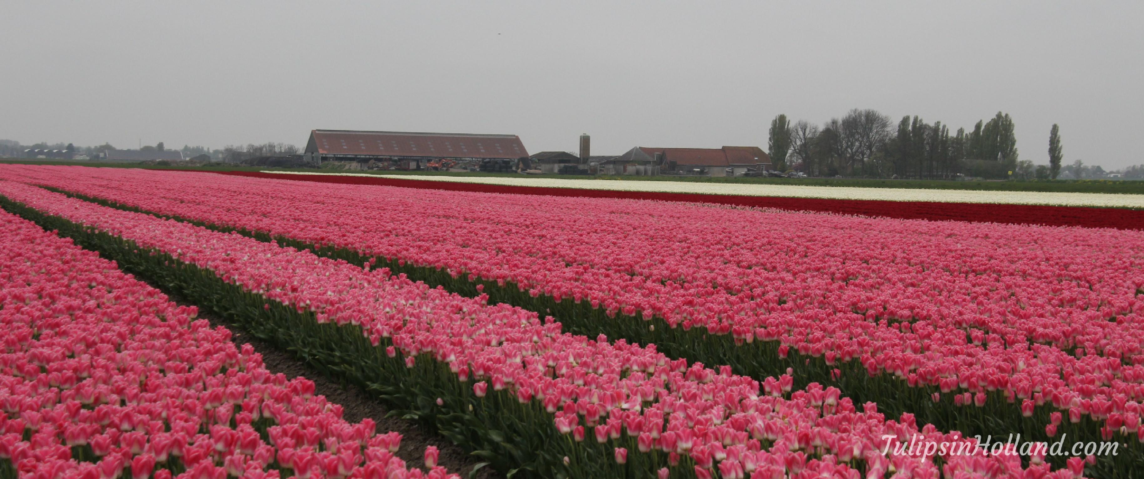 photo flower areas