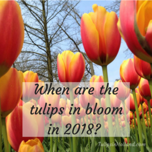 when are the tulips in bloom in 2018