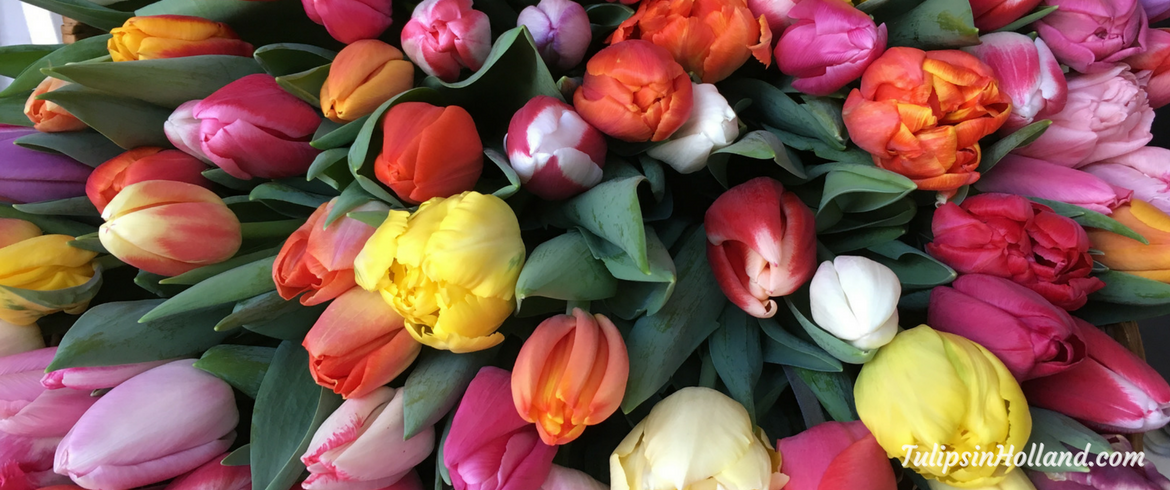 https://tulipsinholland.com/sign-up-for-weekly-flower-update/