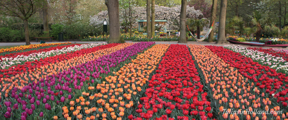 best place to stay near the tulips in holland 2019 edition