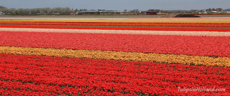 flower field etiquette