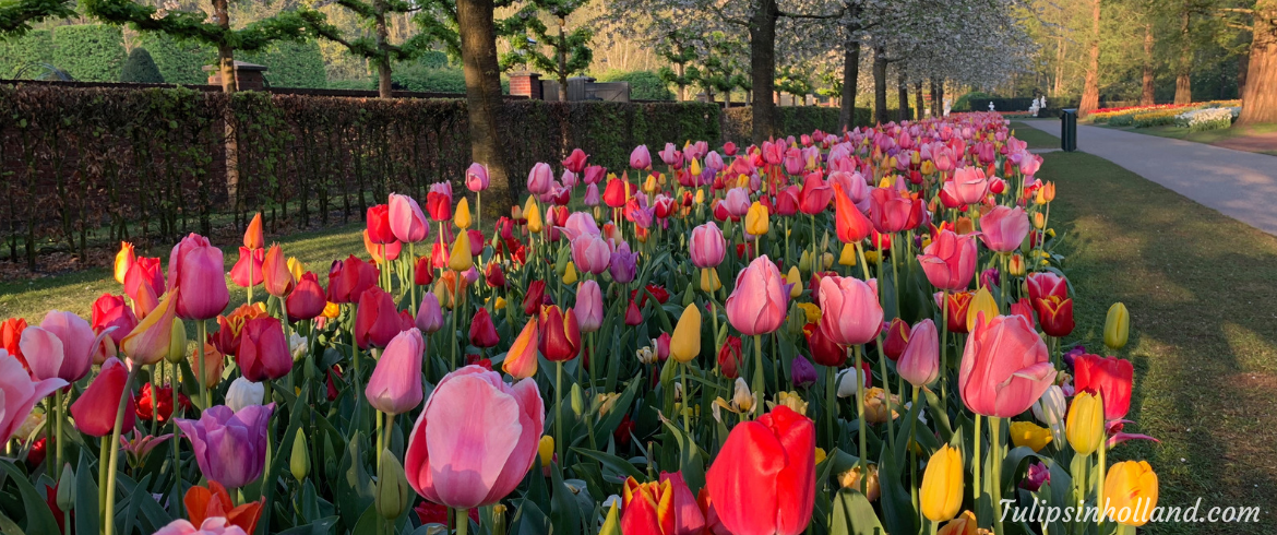 tickets and tours to Keukenhof 2020